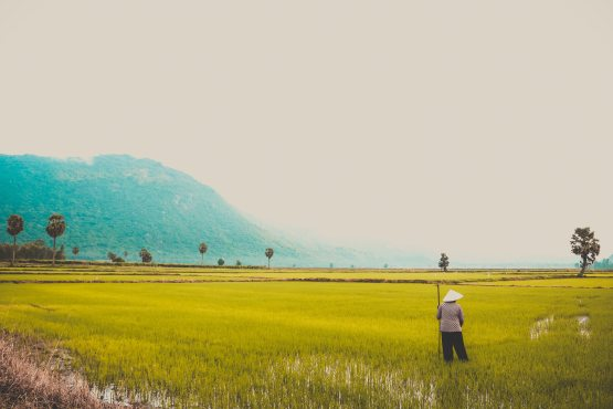 rizs11